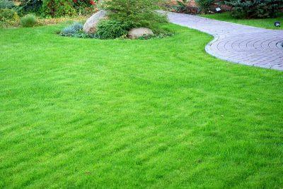 Какие фунгициды можно применять к газонной траве