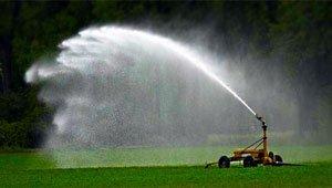 Частота полива газона