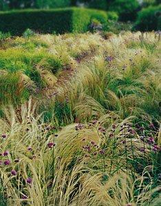 газон для сады