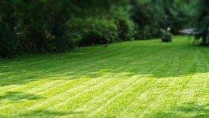газон москва