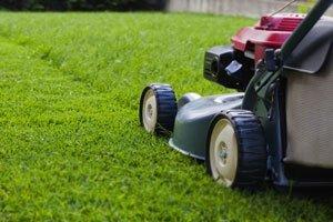 газонная трава спортивная