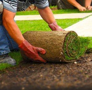 рулонный газон под ключ москва
