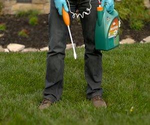 как подготовить почву для газона
