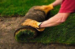 как правильно посадить траву для газона