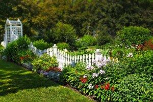 как вырастить газонную траву