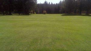 канадская газонная трава