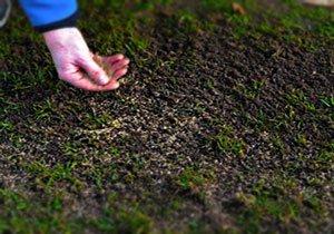 когда сеять газон