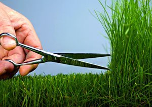 Обслуживание газона