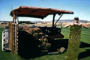посадка газона на даче