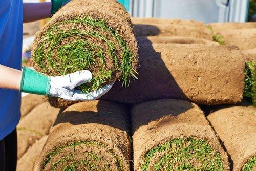 Рулонный газон под ключ дешево