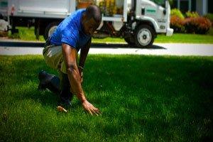 Сеем газонную траву
