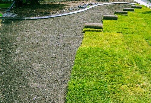 Стоимость газона под ключ