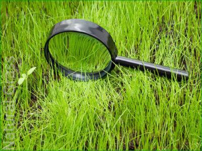 Диагностика болезней газона